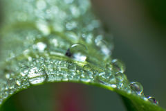 Spring and summer green leafs with waterdrops macro picture. Spring summer green leafs waterdrops macro picture useful for background royalty free stock images