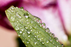 Spring and summer green leafs with waterdrops macro picture Stock Photos
