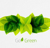 Spring / summer green leaves nature background Royalty Free Stock Photo