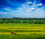 Spring summer green scenery lanscape with horse Stock Photography