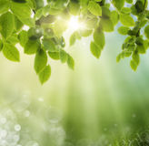 Spring or summer heat abstract royalty free stock photography