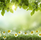 Spring or summer heat abstract .chamomile flower stock image