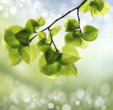 Spring or summer heat abstract royalty free stock photos