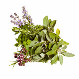 Spring and summer herbs isolated on white Stock Photos
