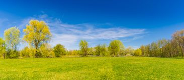 Summer spring landscape panorama. Green trees and green grass under blue sky Stock Image