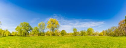Summer spring landscape panorama. Green trees and green grass under blue sky. Spring summer landscape background. Yellow flowers field and green trees leaves and stock photo