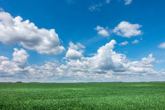 Spring or summer landscape with green meadow and blue sky Royalty Free Stock Photo