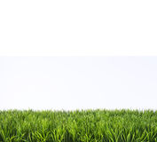 Spring Summer Lawncare Stock Image
