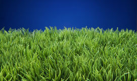 Spring Summer Lawncare Stock Images