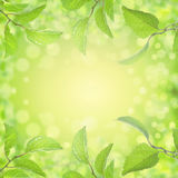 Spring summer leaves background with sun light and bokeh. Frame Stock Photography