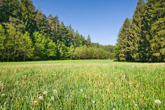 Spring/summer meadow Stock Photography