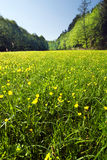 Spring/summer meadow Royalty Free Stock Photo