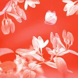 Spring and summer natural background. Beautiful  flowers and butterfly. Living coral. stock photo