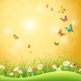Spring or summer natural background Royalty Free Stock Images