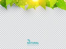 Spring summer natural green background with leaves and lighting. Effect on transparent background. Vector illustration royalty free illustration