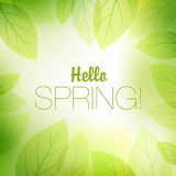 Spring or summer nature background Royalty Free Stock Photography
