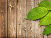 Spring or Summer Background Green Leaves on Wood Royalty Free Stock Image