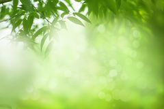 Spring or summer nature background, green tree leaves frame royalty free stock photography