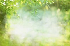 Spring or summer nature background royalty free stock image