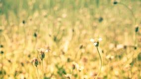 Spring summer  nature little flowers, nature beautiful, toning design, sun plants.wild grass vintage green nature background. Little flowers stock photography