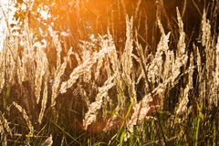 Spring/summer nature scene with a sunshine. Front view of grass with a front sun shine Royalty Free Stock Image