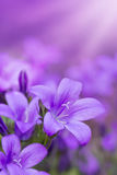 Spring and Summer purples Stock Photos
