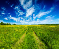 Spring summer rural road in green field landscape Royalty Free Stock Photo