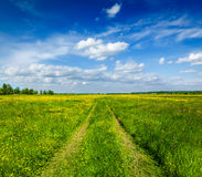 Spring summer - rural road in green field scenery lanscape Stock Images