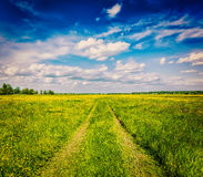 Spring summer - rural road in green field scenery lanscape Royalty Free Stock Image