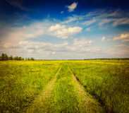Spring summer - rural road in green field scenery Royalty Free Stock Photo