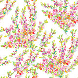 Spring or summer seamless floral background Royalty Free Stock Images