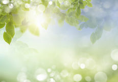 Spring or summer season abstract nature background. With grass and blue sky in the back
