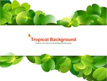 Bright tropical background with jungle plants. Stock Photography