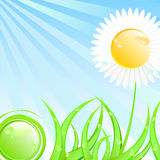 Spring or summer sunny illustration. Spring or summer illustration. Flower in grass covered by sunrays, morning dew included Stock Photo