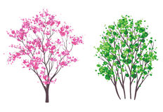 Spring and summer trees. Illustration of spring and summer trees, isolated on white Royalty Free Stock Photos