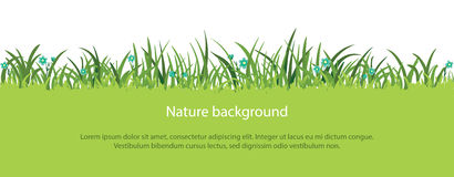 Spring or summer vector grass border. Vector green grass border with flowers, spring or summer nature background Royalty Free Stock Image