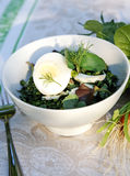 Spring-summer weed herbs salad for a picnic. Healthy enrich salad with spring native-grasses weed and vegetable plants - sorrel, clover, nettle, glague, lady's stock images
