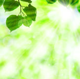 Spring sun beam with green leaves. Over shiny lights background Royalty Free Stock Image