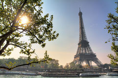 Spring sun Eiffel tree Royalty Free Stock Photo