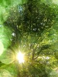 Spring summer nature background with glowing sun rays, trees, green leaves and sunlight bokeh Royalty Free Stock Images