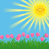 Spring sun and flowers. Spring flowers and grass illustration with the shining sun Royalty Free Stock Photo