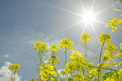 Spring sun light Royalty Free Stock Photos