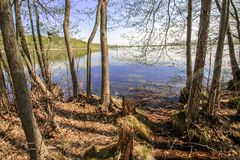 Spring sun magic bright forest beautiful sunny blue sky lake Royalty Free Stock Photography