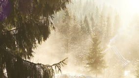 Spring sun melting snow on the fir branches with mountain house on the background stock footage