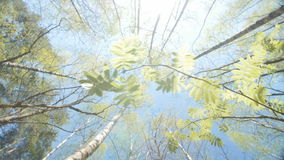 Spring Sun Shining Through Canopy Of Tall Trees. Upper Branches Of Tree. Sunlight Through Green Tree Crown - Low Angle View. Camera rotates on its axis. Slow stock video