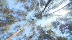 Spring Sun Shining Through Canopy Of Tall Trees. stock footage