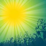 Spring sun theme Stock Photos