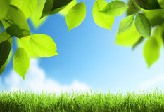 Spring sunny background Royalty Free Stock Photo
