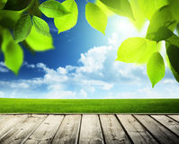 Spring sunny background Royalty Free Stock Images