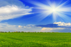 Spring sunny day. On a green meadow. Summer landscape Stock Image